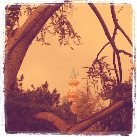 Disneyland  1146